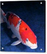 Koi Handpick Pool Acrylic Print