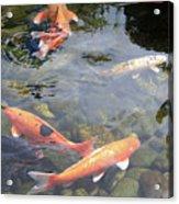 Koi In Pond II Acrylic Print