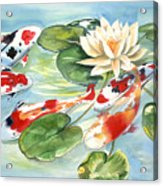 Koi In The Water Lilies Acrylic Print