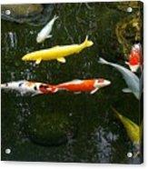 Koi-jfg Cherry Blossom Festival 2013-4 Acrylic Print