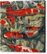 Koi Karp Acrylic Print
