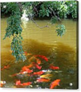Koi Party Acrylic Print