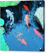 Koi Pond 1 Acrylic Print