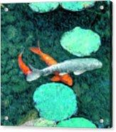 Koi Pond 3 Acrylic Print