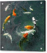 Koi Symphony 2 Stylized Acrylic Print