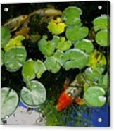 Koi With Lily Pads D Acrylic Print