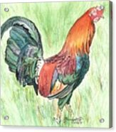 Kokee Rooster Acrylic Print