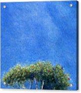 Kokee Trees Acrylic Print