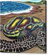Kona Turtle Acrylic Print