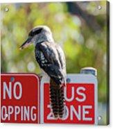 Kookaburra On A Road Sign Acrylic Print