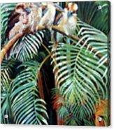Kookaburra Perch Acrylic Print