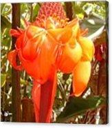 Koolau Flower Hawaii Acrylic Print