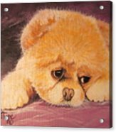 Flying Lamb Productions     Koty The Puppy Acrylic Print
