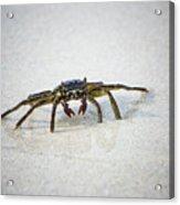 Kua Bay Crab 1 Acrylic Print