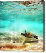 Kua Bay Honu Acrylic Print
