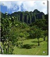 Kualoa Orchard Acrylic Print
