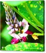Kudzoo Flower Acrylic Print
