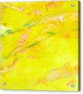 Kueken Acrylic Print