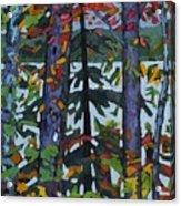 Kushog Colours Acrylic Print