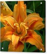 Kwanzaa Lily Acrylic Print