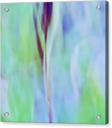 L Epi Acrylic Print by Variance Collections