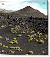 La Palma, Canary Island, Blooming Volcanic Landscape At Cap De Fuencaliente Acrylic Print