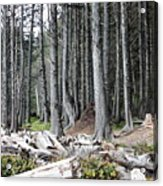 La Push Beach Trees Acrylic Print