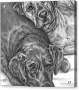 Labrador Dogs Nap Time Acrylic Print