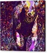 Labrador Puppy Retriever Dog Young  Acrylic Print
