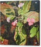 Lace Cap 1 Acrylic Print