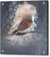 Lace Murex Sea Shell In Blue Acrylic Print