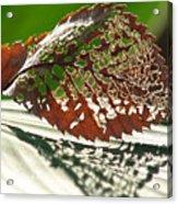 Lacy Leaf Acrylic Print