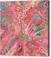 Lacy Pink Palms Acrylic Print