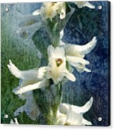 Ladies-tresses Orchid Acrylic Print