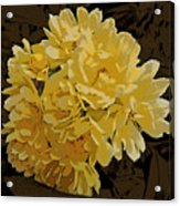 Lady Banks Rose Cluster Acrylic Print