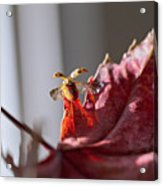 Lady Bug Flight Acrylic Print