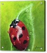 Lady Bug II Acrylic Print