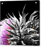 Lady Bug Thistle Acrylic Print