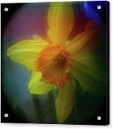 Lady Spring 1 Acrylic Print