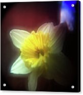 Lady Spring 2 Acrylic Print