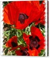Ladybird Poppy Acrylic Print