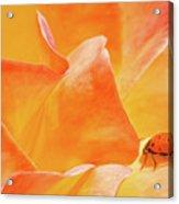 Ladybug Alights Acrylic Print