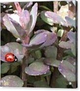 Ladybug Garden Acrylic Print