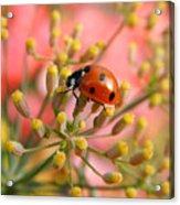 Ladybug On Fennel Acrylic Print