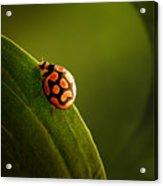 Ladybug  On Green Leaf Acrylic Print