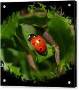 Ladybug With Swirly Framing Acrylic Print