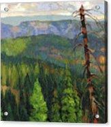Ladycamp Acrylic Print
