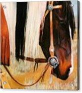 Ladys Jewels Horse Painting Portrait Acrylic Print