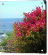 Laguna Beach, Southern California 3 Acrylic Print
