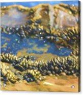 Laguna Beach Tide Pool Pattern 3 Acrylic Print